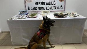Mersin Tarsus'ta Jandarmadan Uyuşturucu Madde Temin Edilerek Satışı Yapılan İş Yerine Operasyon
