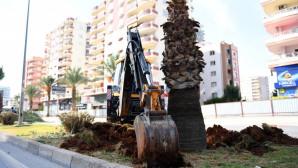 Proje Alanındaki 113 Ağaç Özenle Taşınıyor