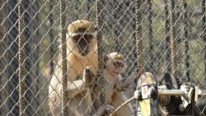 Mersin Büyükşehir, Çocuklara Hayvan Sevgisini Aşılıyor