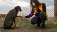 Sokak Hayvanları, Pati Uzatarak Teşekkür Ettiler