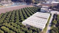 Tarsus Belediyesi 1 Milyon Ücretsiz Tarsus Kıvırcığını(Marul) Dağıtımına Hazırlanıyor