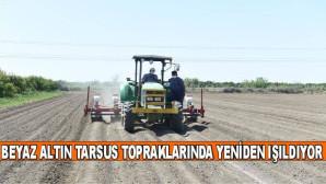 BEYAZ ALTIN TARSUS TOPRAKLARINDA YENİDEN IŞILDIYOR