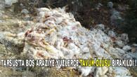 Tarsus'ta Boş Araziye Yüzlerce Tavuk Ölüsü Bırakıldı!