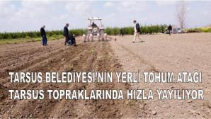TARSUS BELEDİYESİ'NİN YERLİ TOHUM ATAĞI TARSUS TOPRAKLARINDA HIZLA YAYILIYOR