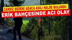 Mersin'in Erdemli İlçesinde S.K. İsimli Kişinin Cansız Bedeni Erik Ağacına Asılı Halde Bulundu