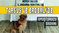 Jandarmadan Tarsus ve Erdemli'de Yasa Dışı Kenevir Operasyonu