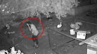 Güvenlik kamerasını fark eden hırsızın yaptığı hareket tebessüm yarattı