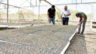 Tarsus Belediyesi Zehirsiz Mutfaklar Yaratmak Amacıyla Üreticilere Ücretsiz 700 Bin Fide Dağıtacak